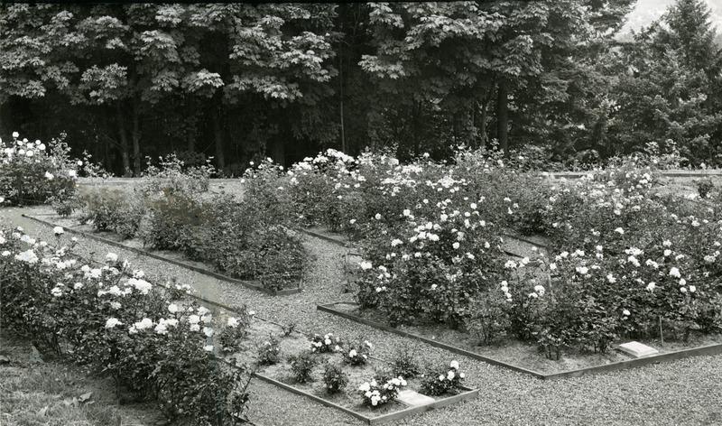1947 Rose Garden 2.tif