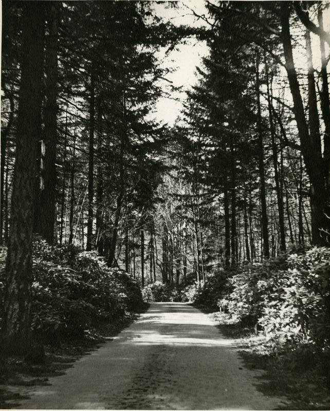1945 Woods.tif